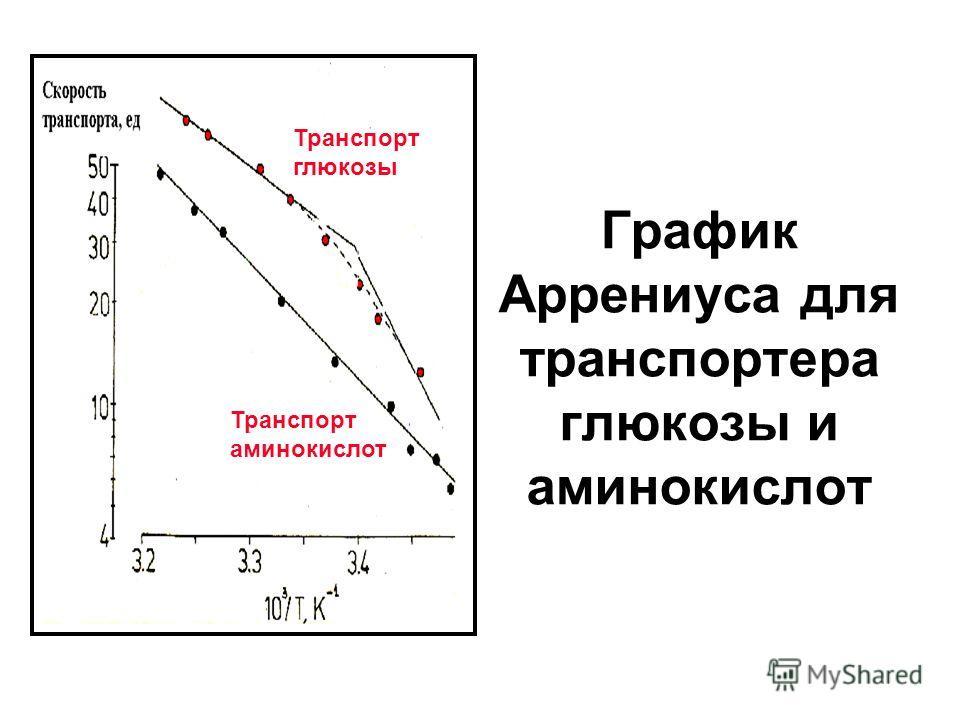 График Аррениуса для транспортера глюкозы и аминокислот Транспорт аминокислот Транспорт глюкозы