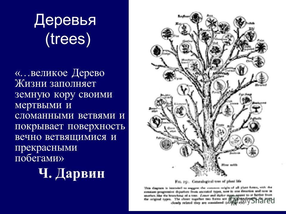 Деревья (trees) «…великое Дерево Жизни заполняет земную кору своими мертвыми и сломанными ветвями и покрывает поверхность вечно ветвящимися и прекрасными побегами» Ч. Дарвин