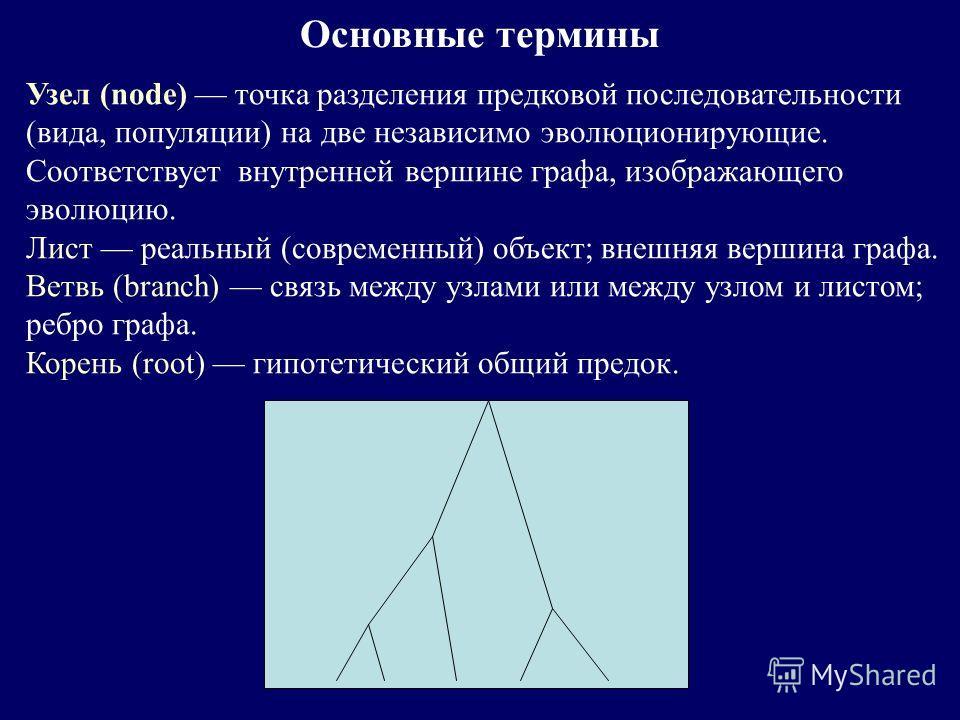 Основные термины Узел (node) точка разделения предковой последовательности (вида, популяции) на две независимо эволюционирующие. Соответствует внутренней вершине графа, изображающего эволюцию. Лист реальный (современный) объект; внешняя вершина графа