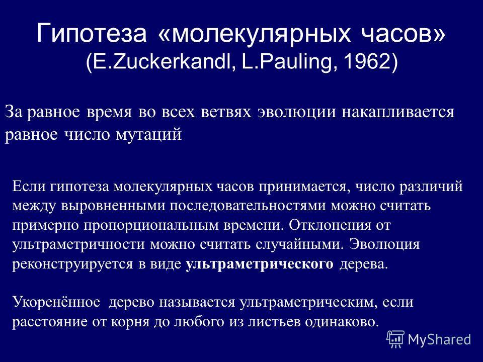 Гипотеза «молекулярных часов» (E.Zuckerkandl, L.Pauling, 1962) За равное время во всех ветвях эволюции накапливается равное число мутаций Если гипотеза молекулярных часов принимается, число различий между выровненными последовательностями можно счита
