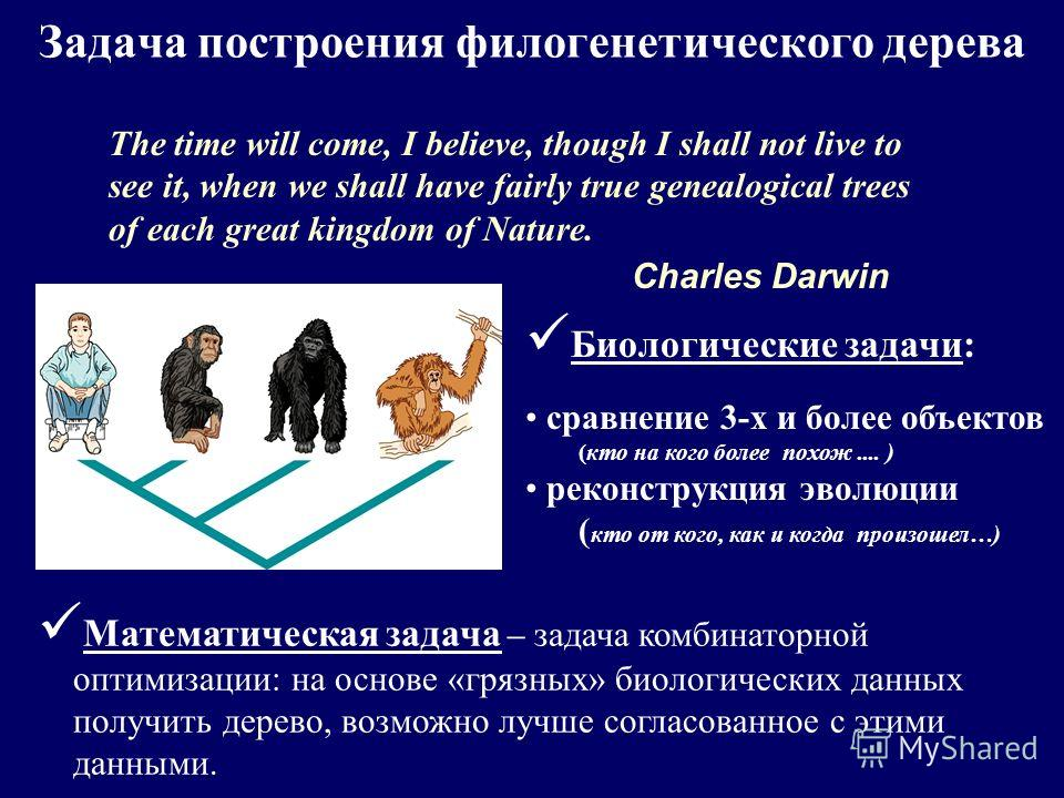 Задача построения филогенетического дерева The time will come, I believe, though I shall not live to see it, when we shall have fairly true genealogical trees of each great kingdom of Nature. Charles Darwin Математическая задача – задача комбинаторно