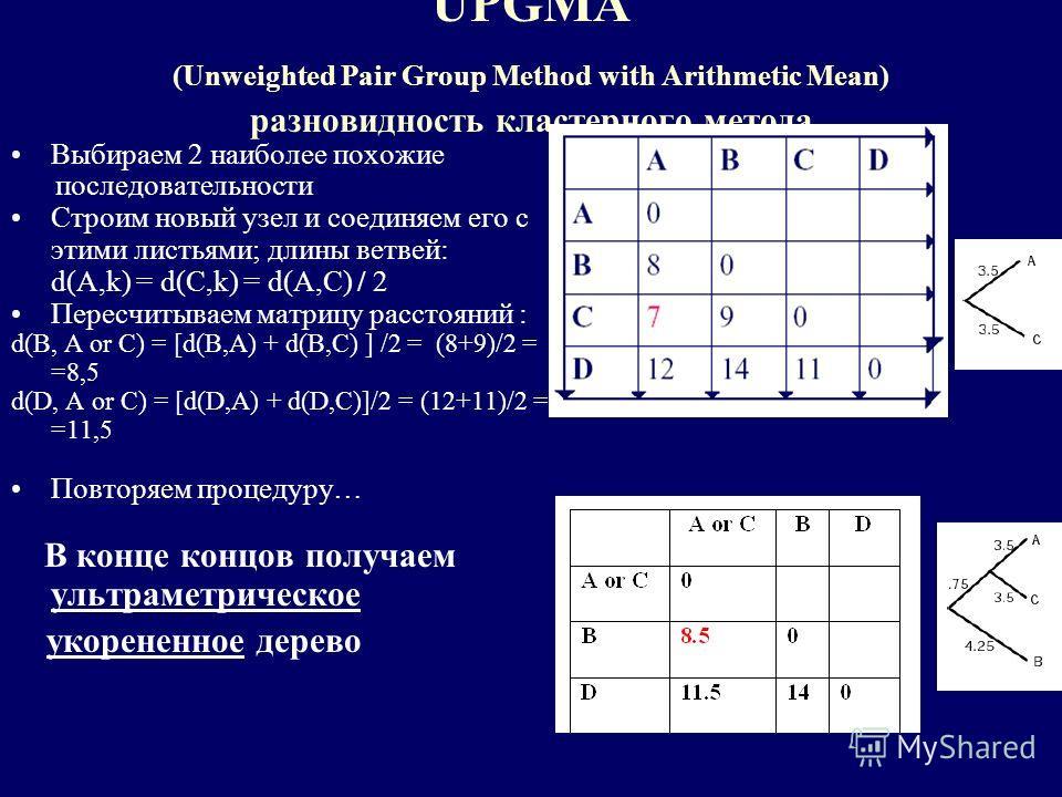 UPGMA (Unweighted Pair Group Method with Arithmetic Mean) разновидность кластерного метода Выбираем 2 наиболее похожие последовательности Строим новый узел и соединяем его с этими листьями; длины ветвей: d(A,k) = d(C,k) = d(A,C) / 2 Пересчитываем мат