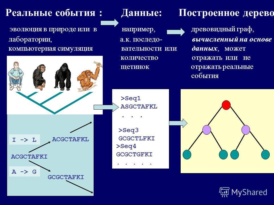 Реальные события : Данные: Построенное дерево эволюция в природе или в например, древовидный граф, лаборатории, а.к. последо- вычисленный на основе компьютерная симуляция вательности или данных, может количество отражать или не щетинок отражать реаль