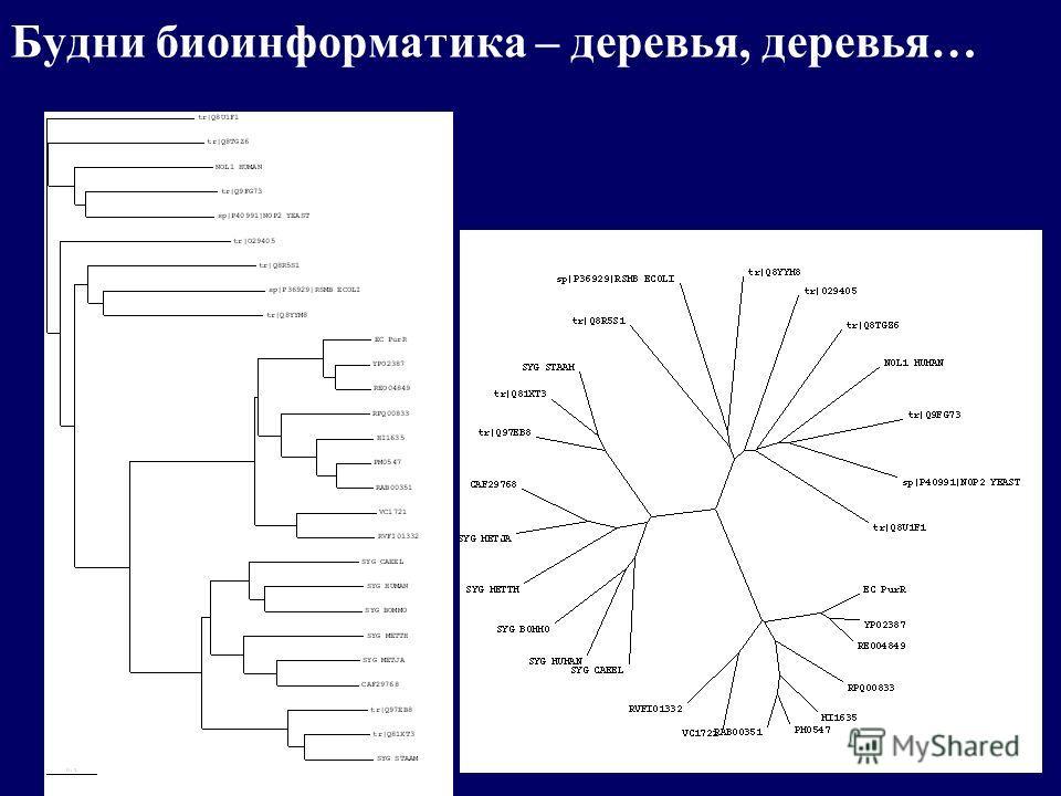 Будни биоинформатика – деревья, деревья…