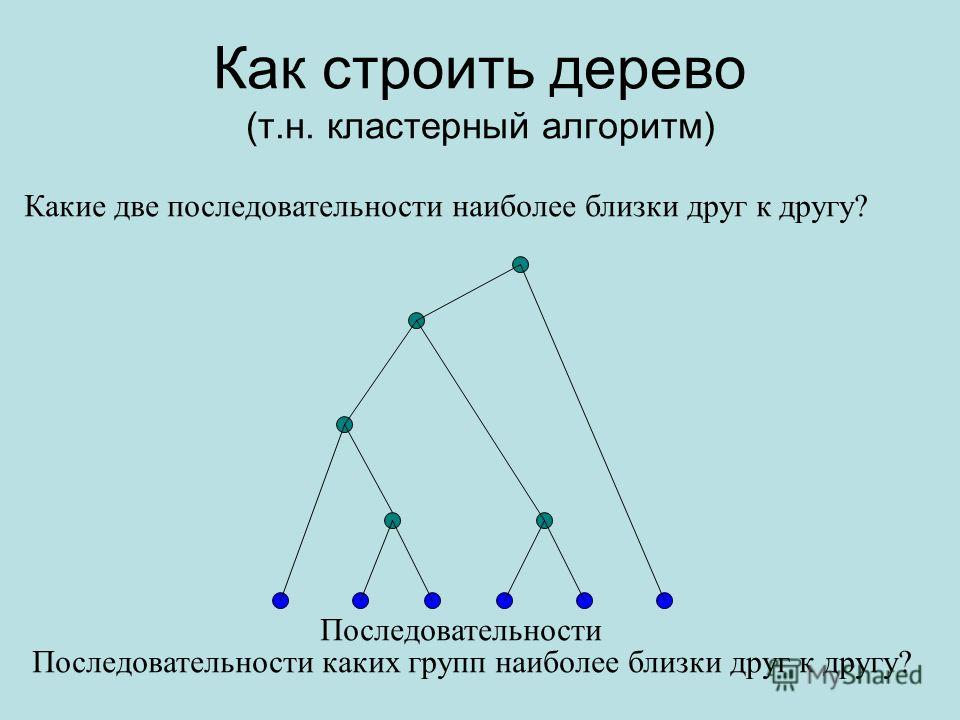 Как строить дерево (т.н. кластерный алгоритм) Какие две последовательности наиболее близки друг к другу? Последовательности каких групп наиболее близки друг к другу? Последовательности