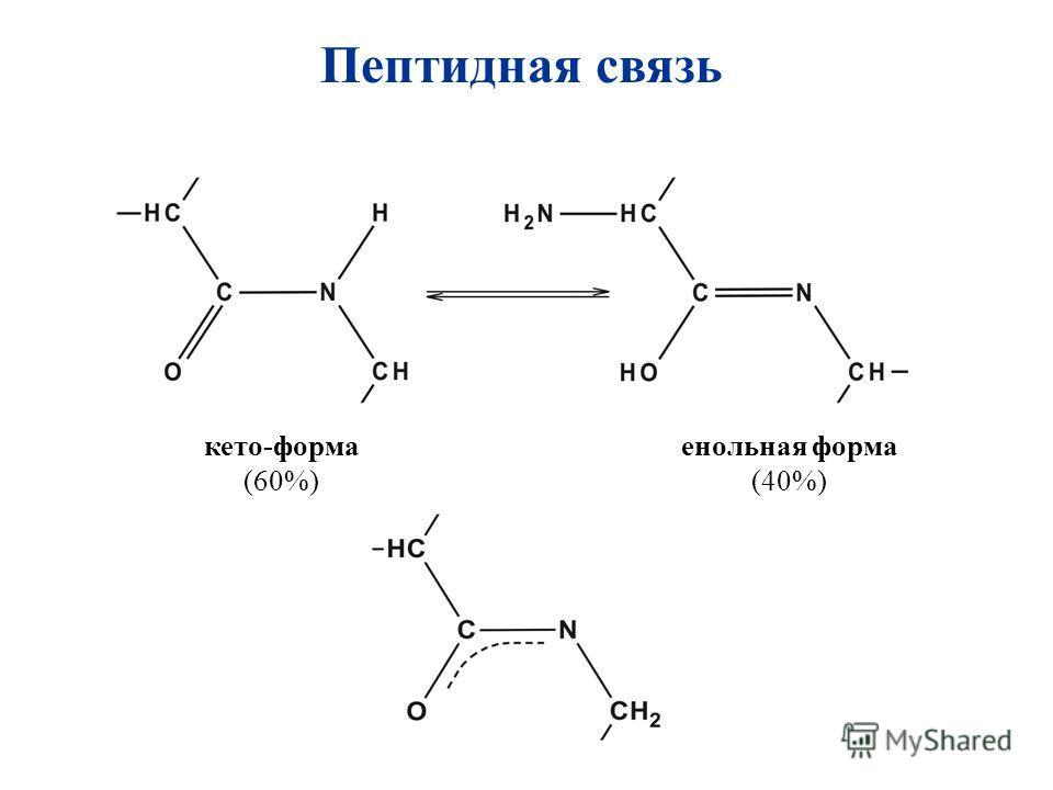 Пептидная связь кето-форма (60%) енольная форма (40%)