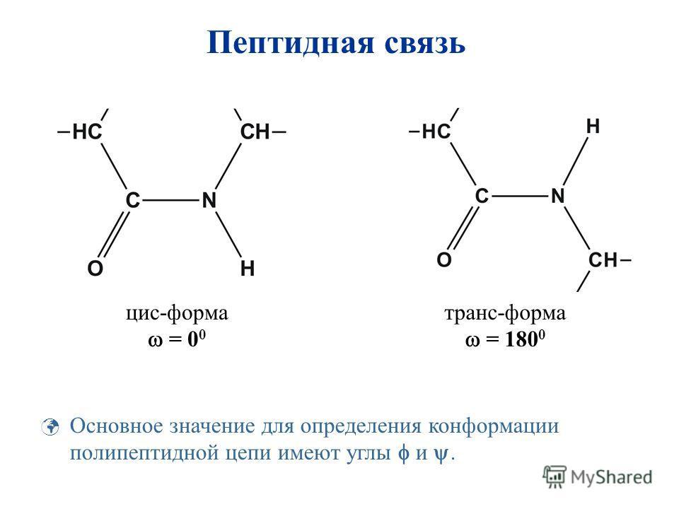 цис-форма = 0 0 транс-форма = 180 0 Основное значение для определения конформации полипептидной цепи имеют углы и. Пептидная связь