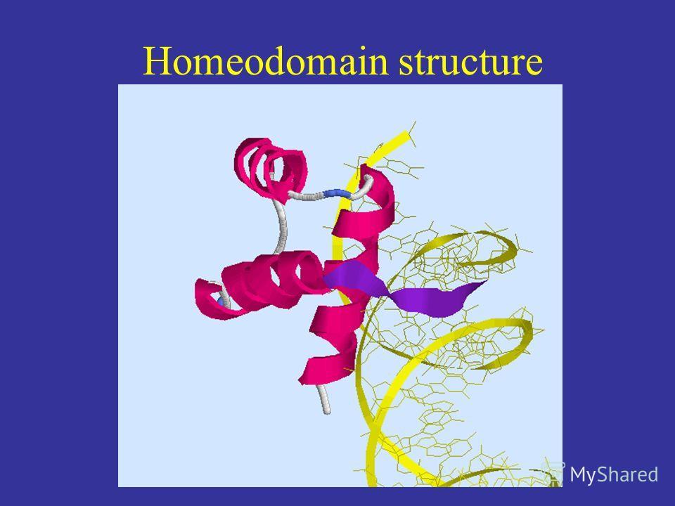 Homeodomain structure