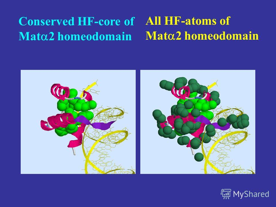 Conserved HF-core of Mat 2 homeodomain All HF-atoms of Mat 2 homeodomain