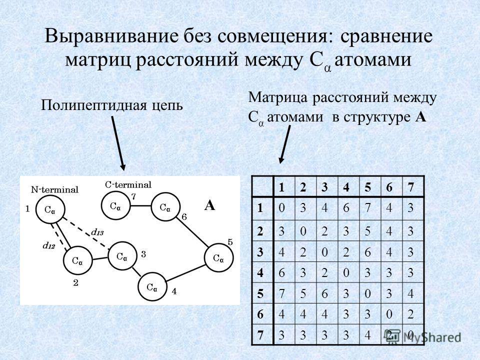 Выравнивание без совмещения: сравнение матриц расстояний между C α атомами Матрица расстояний между C α атомами в структуре A A 1234567 10346743 23023543 34202643 46320333 57563034 64443302 73333420 Полипептидная цепь