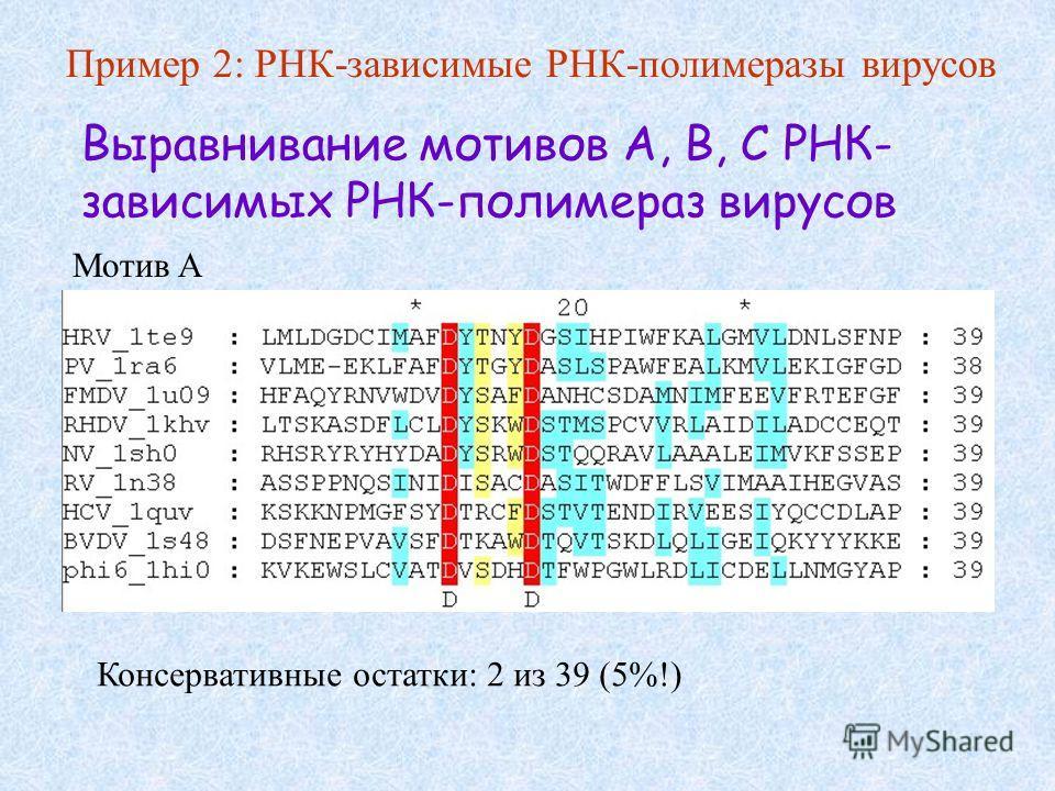 Выравнивание мотивов A, B, C РНК- зависимых РНК-полимераз вирусов Мотив A Консервативные остатки: 2 из 39 (5%!) Пример 2: РНК-зависимые РНК-полимеразы вирусов