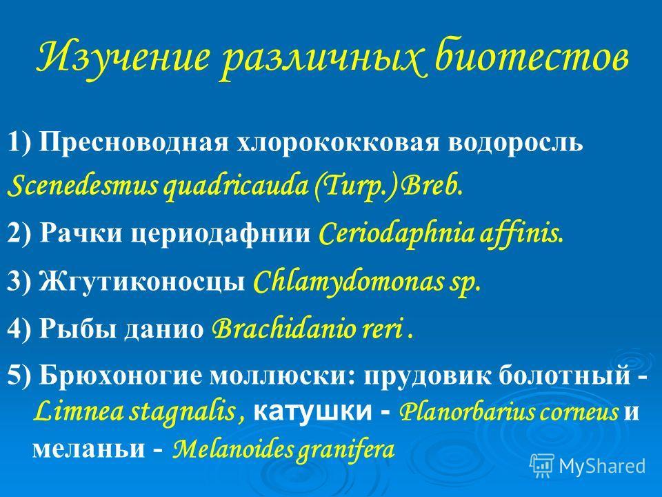 Изучение различных биотестов 1) Пресноводная хлорококковая водоросль Scenedesmus quadricauda (Turp.) Breb. 2) Рачки цериодафнии Ceriodaphnia affinis. 3) Жгутиконосцы Chlamydomonas sp. 4) Рыбы данио Brachidanio reri. 5) Брюхоногие моллюски: прудовик б
