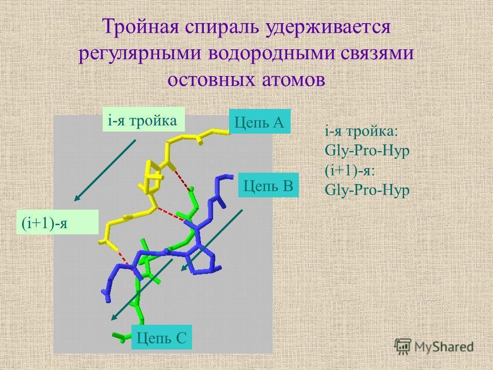 Тройная спираль удерживается регулярными водородными связями остовных атомов Цепь A Цепь C Цепь B i-я тройка (i+1)-я i-я тройка: Gly-Pro-Hyp (i+1)-я: Gly-Pro-Hyp