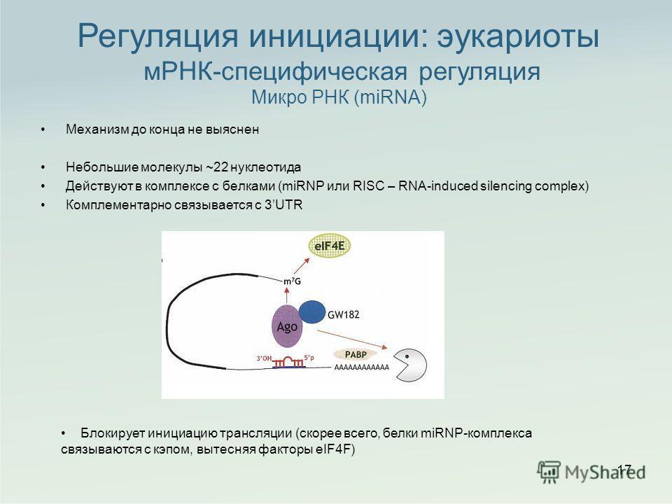 Механизм до конца не выяснен Небольшие молекулы ~22 нуклеотида Действуют в комплексе с белками (miRNP или RISC – RNA-induced silencing complex) Комплементарно связывается с 3UTR 17 Регуляция инициации: эукариоты мРНК-специфическая регуляция Микро РНК