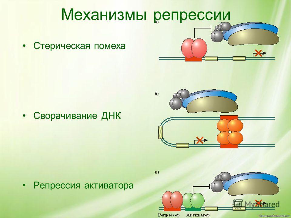 Механизмы репрессии Стерическая помеха Сворачивание ДНК Репрессия активатора
