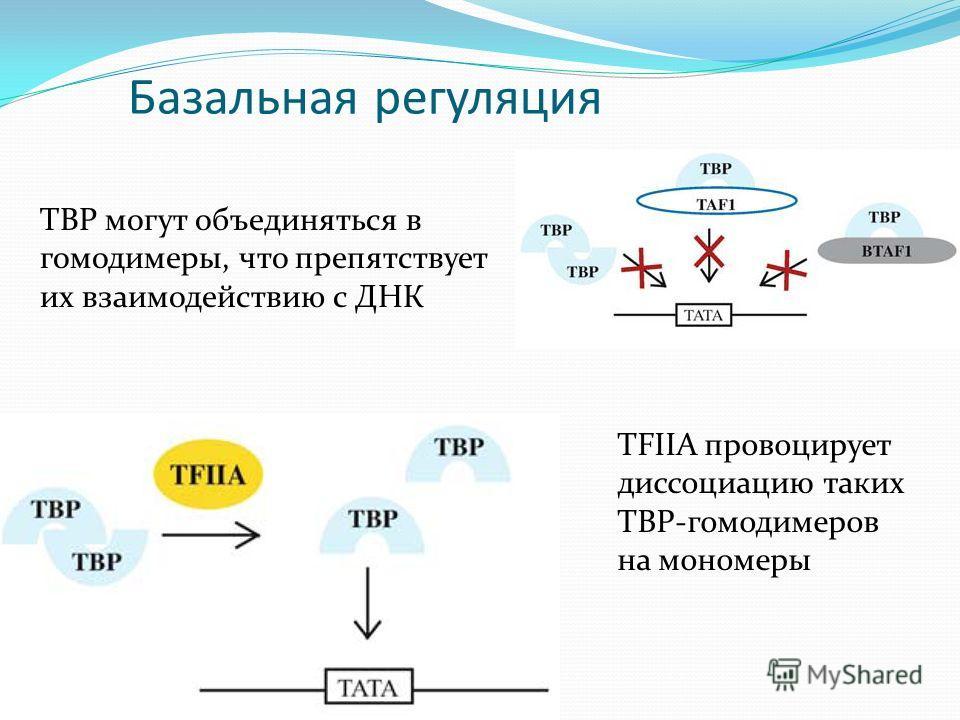 Базальная регуляция TBP могут объединяться в гомодимеры, что препятствует их взаимодействию с ДНК TFIIA провоцирует диссоциацию таких TBP-гомодимеров на мономеры