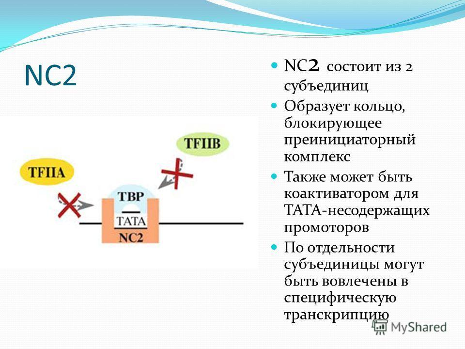NC2 NC 2 cостоит из 2 субъединиц Образует кольцо, блокирующее преинициаторный комплекс Также может быть коактиватором для TATA-несодержащих промоторов По отдельности субъединицы могут быть вовлечены в специфическую транскрипцию