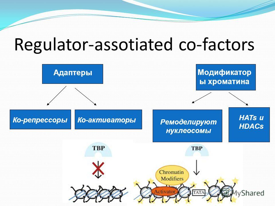 Regulator-assotiated co-factors Адаптеры Модификатор ы хроматина Ко-репрессорыКо-активаторы Ремоделируют нуклеосомы HATs и HDACs