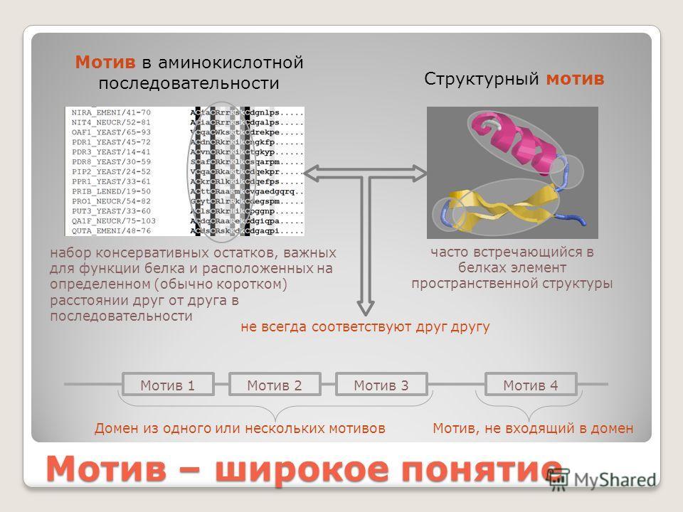 Мотив – широкое понятие Мотив в аминокислотной последовательности Структурный мотив часто встречающийся в белках элемент пространственной структуры набор консервативных остатков, важных для функции белка и расположенных на определенном (обычно коротк