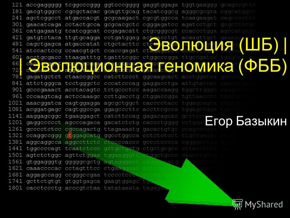 Эволюция (ШБ) | | Эволюционная геномика (ФББ) Егор Базыкин