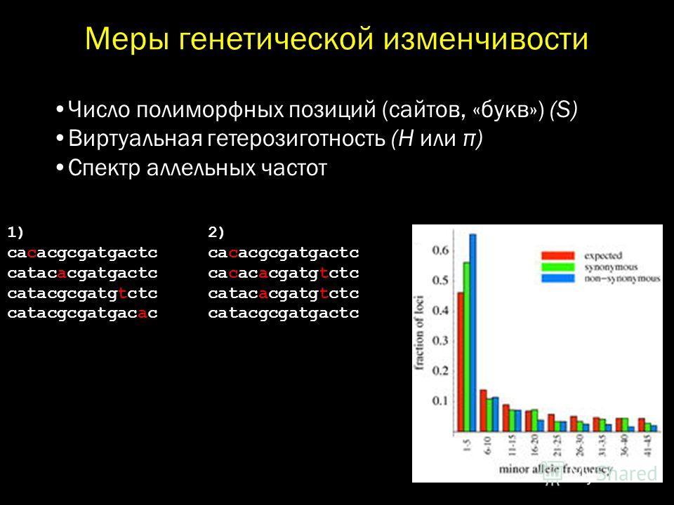 Меры генетической изменчивости Число полиморфных позиций (сайтов, «букв») (S) Виртуальная гетерозиготность (H или π) Спектр аллельных частот 1) 2) cacacgcgatgactc catacacgatgactc cacacacgatgtctc catacgcgatgtctc catacacgatgtctc catacgcgatgacac catacgc