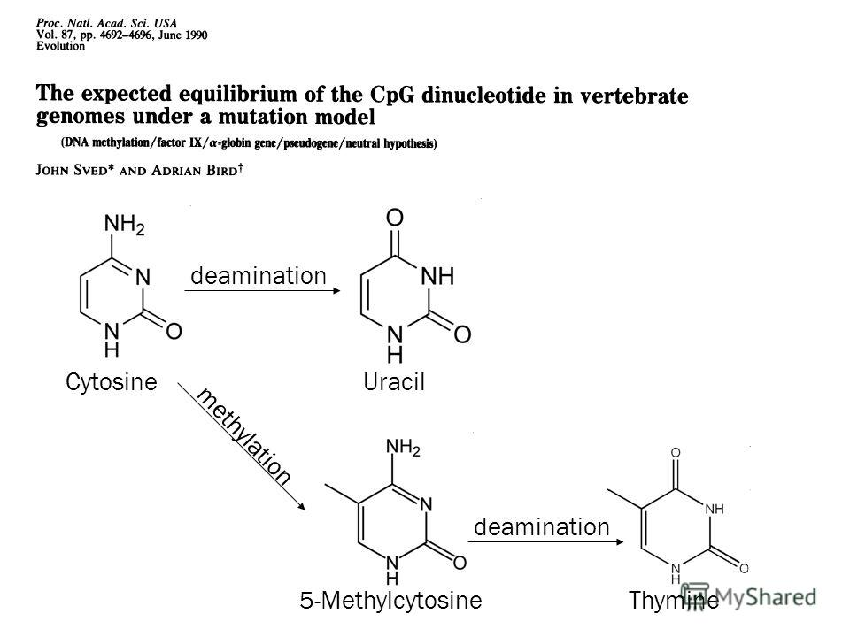 deamination CytosineUracil methylation deamination 5-MethylcytosineThymine