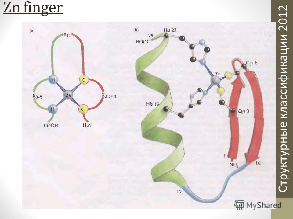 Структурные классификации 2012 Zn finger