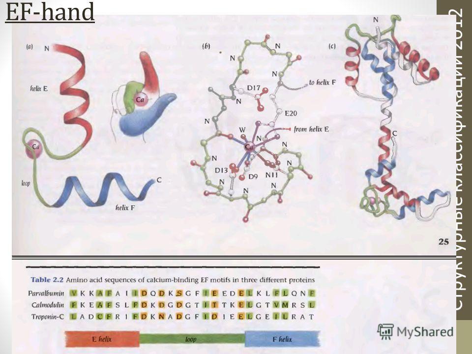 Структурные классификации 2012 EF-hand