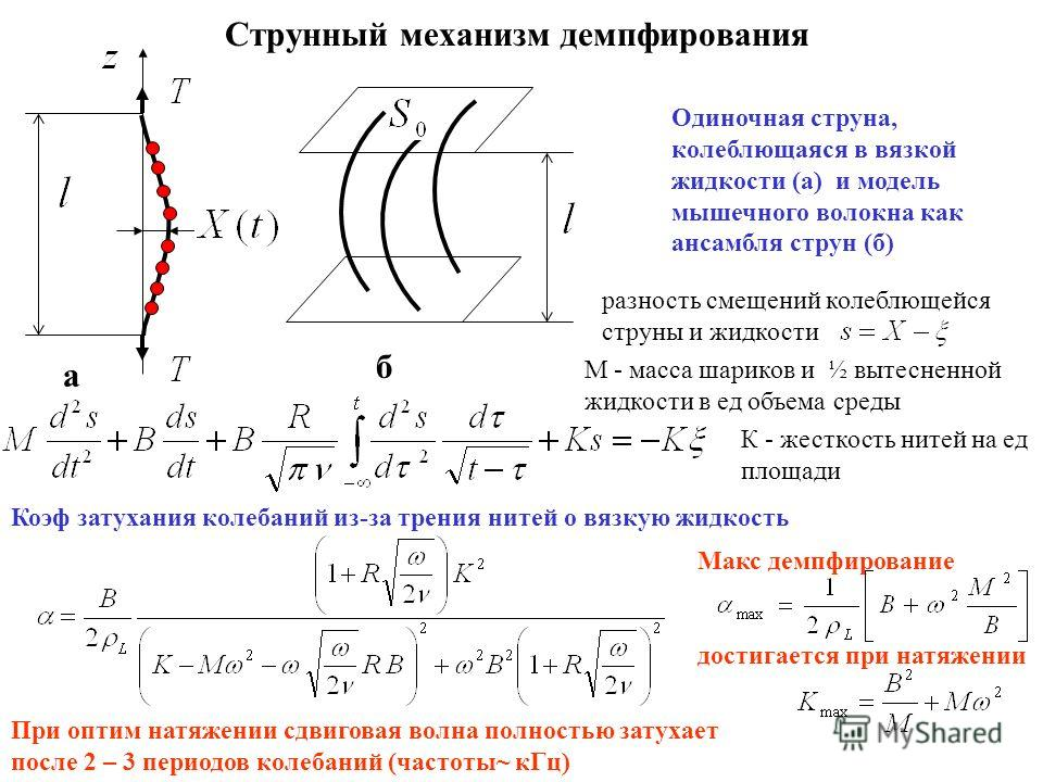 Струнный механизм демпфирования a б Одиночная струна, колеблющаяся в вязкой жидкости (а) и модель мышечного волокна как ансамбля струн (б) разность смещений колеблющейся струны и жидкости М - масса шариков и ½ вытесненной жидкости в ед объема среды К