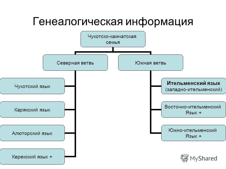 Генеалогическая информация Чукотско- камчатская семья Северная ветвь Чукотский язык Карякский язык Алюторский язык Керекский язык + Южная ветвь Ительменский язык (западно- ительменский) Восточно- ительменский Язык + Южно- ительменский Язык +
