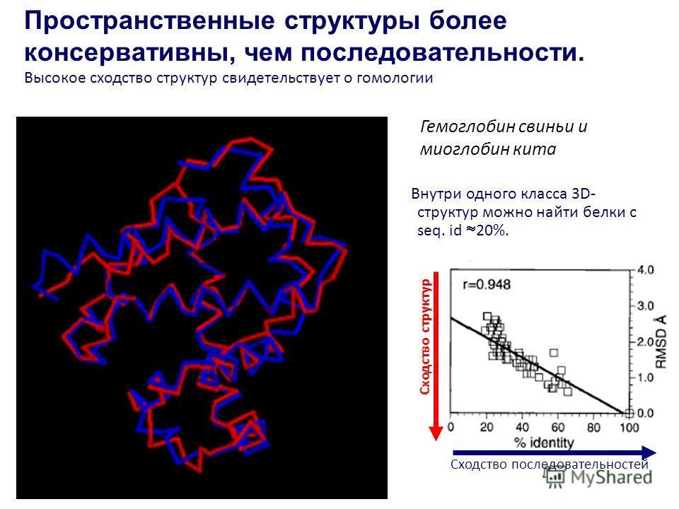 Пространственные структуры более консервативны, чем последовательности. Высокое сходство структур свидетельствует о гомологии Внутри одного класса 3D- структур можно найти белки с seq. id 20%. Гемоглобин свиньи и миоглобин кита Сходство последователь