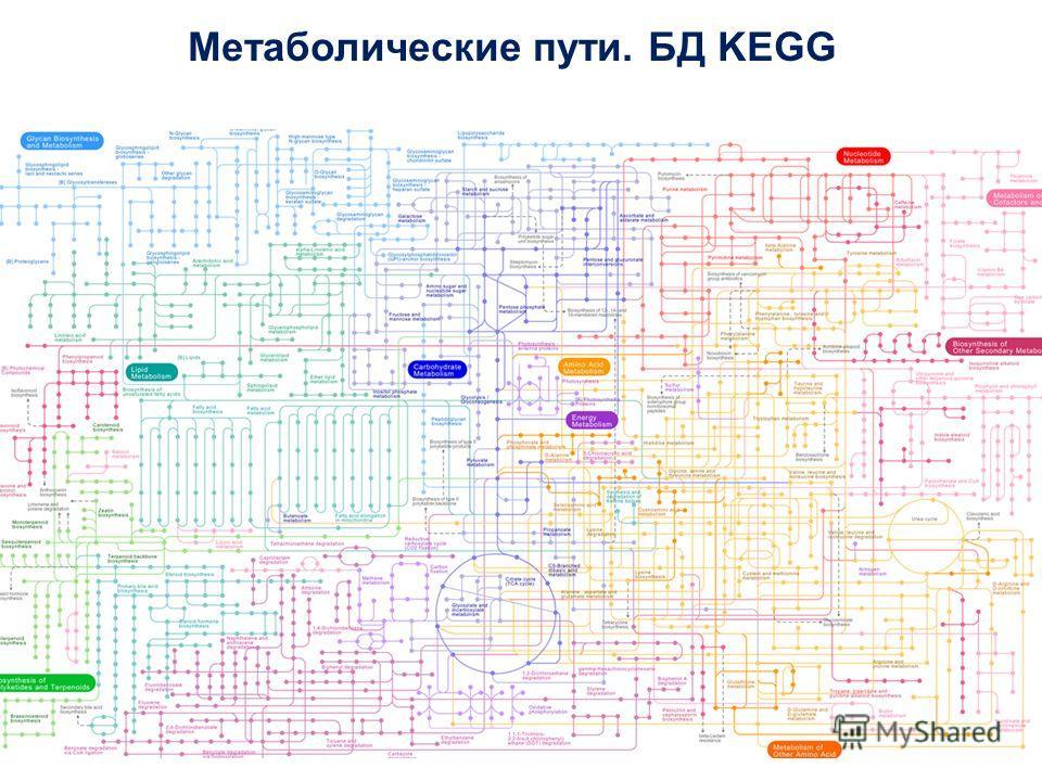 Метаболические пути. БД KEGG