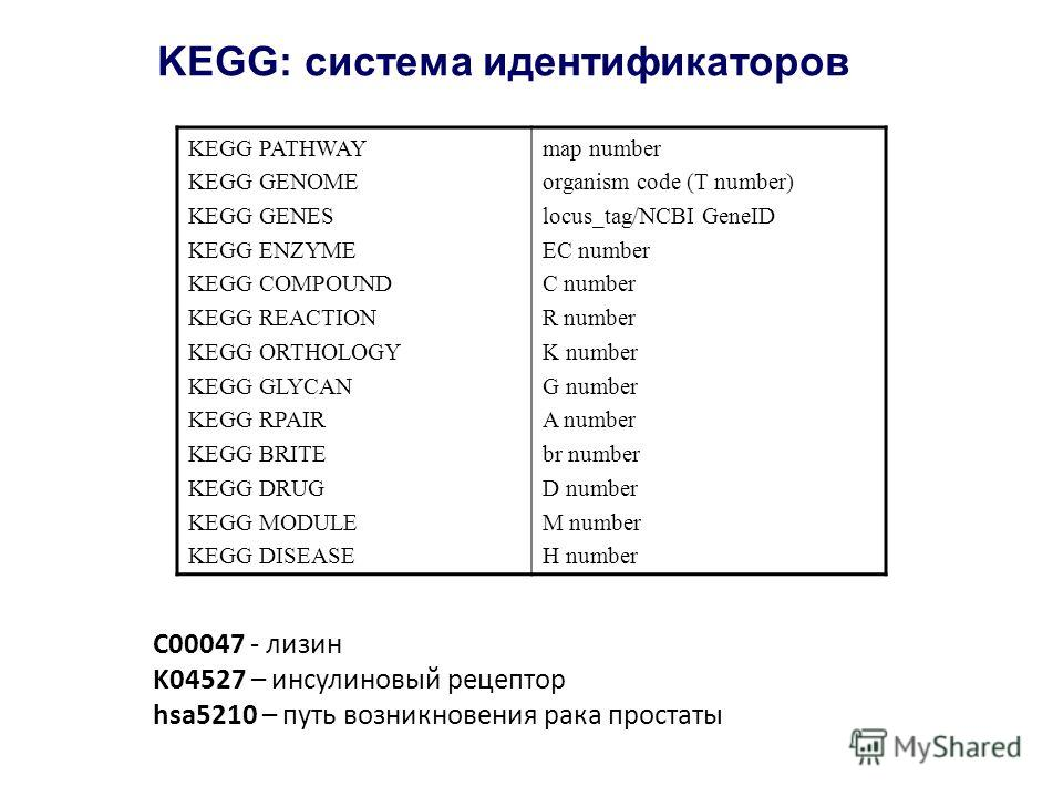KEGG: система идентификаторов KEGG PATHWAY KEGG GENOME KEGG GENES KEGG ENZYME KEGG COMPOUND KEGG REACTION KEGG ORTHOLOGY KEGG GLYCAN KEGG RPAIR KEGG BRITE KEGG DRUG KEGG MODULE KEGG DISEASE map number organism code (T number) locus_tag/NCBI GeneID EC