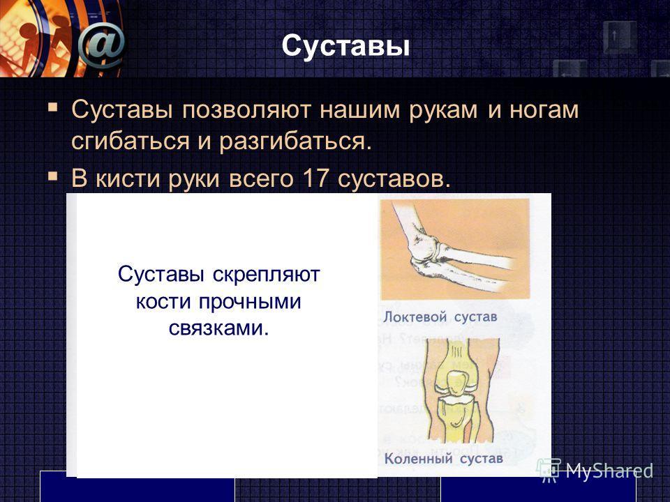 LOGO www.themegallery.com Суставы Суставы позволяют нашим рукам и ногам сгибаться и разгибаться. В кисти руки всего 17 суставов. Суставы скрепляют кости прочными связками.