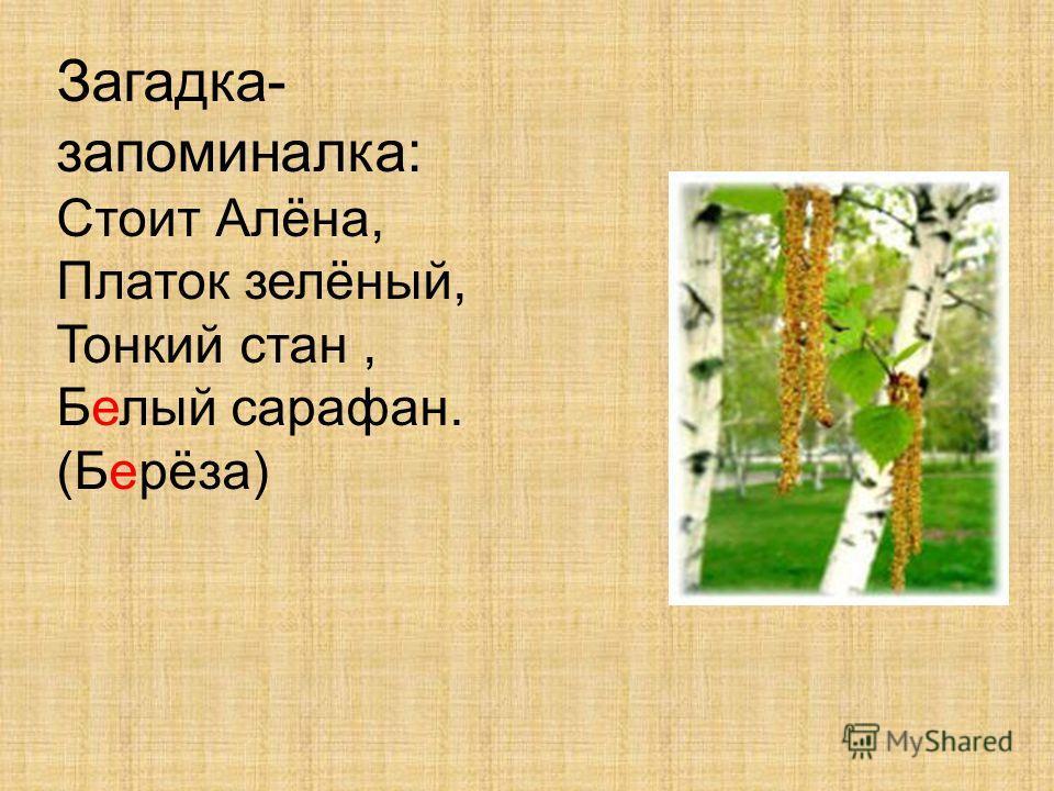 Загадка- запоминалка: Стоит Алёна, Платок зелёный, Тонкий стан, Белый сарафан. (Берёза)
