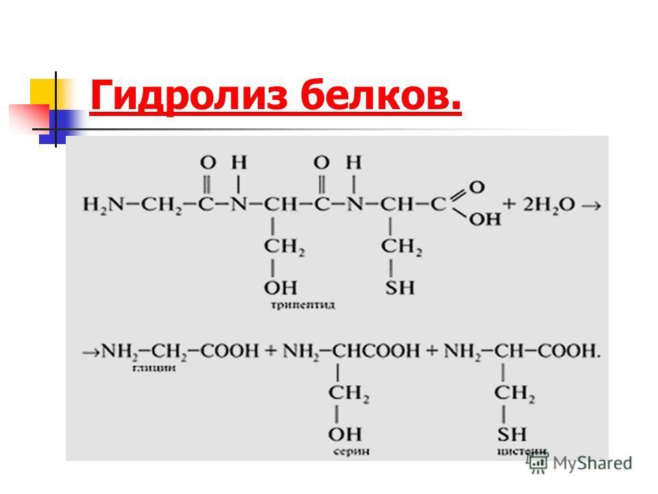 Гидролиз белков.