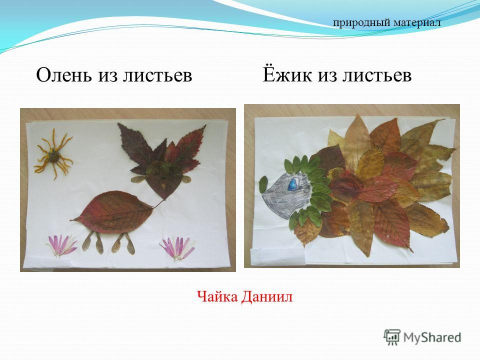 Олень из листьев Ёжик из листьев Чайка Даниил природный материал