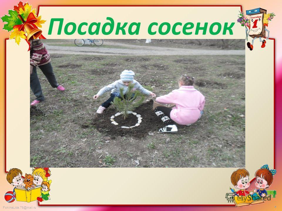 FokinaLida.75@mail.ru Посадка сосенок