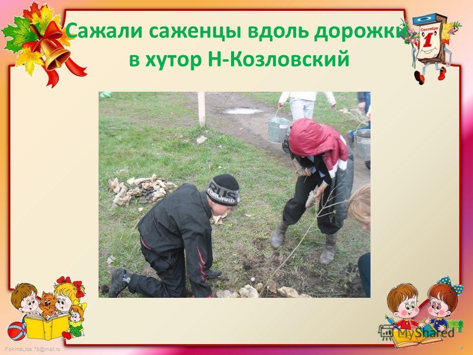 FokinaLida.75@mail.ru Сажали саженцы вдоль дорожки в хутор Н-Козловский
