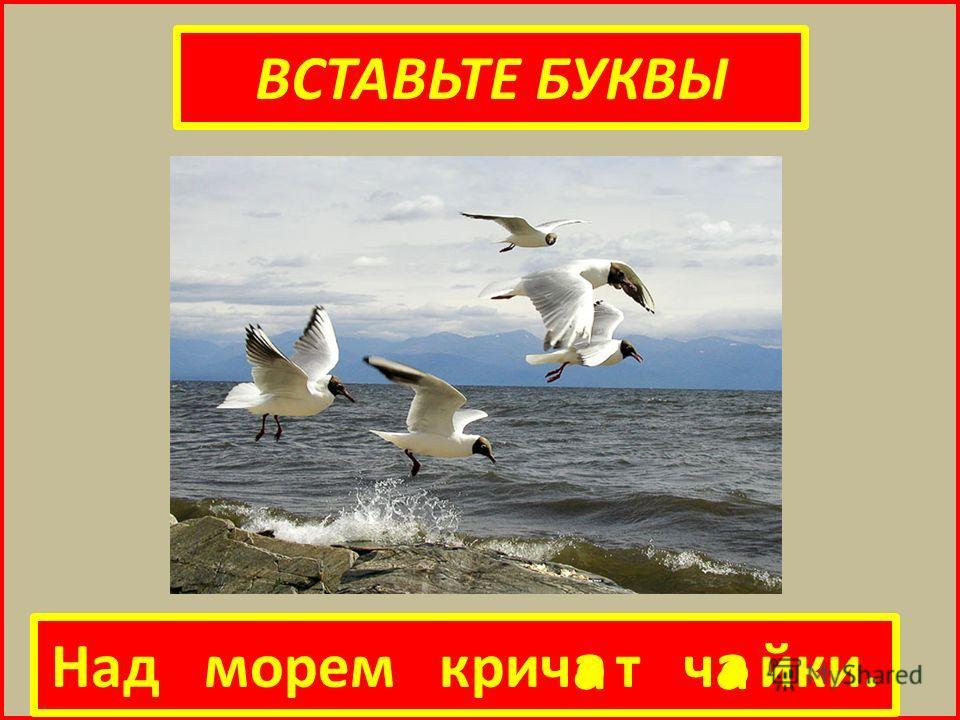 ВСТАВЬТЕ БУКВЫ Над морем крич т ч йки. а а