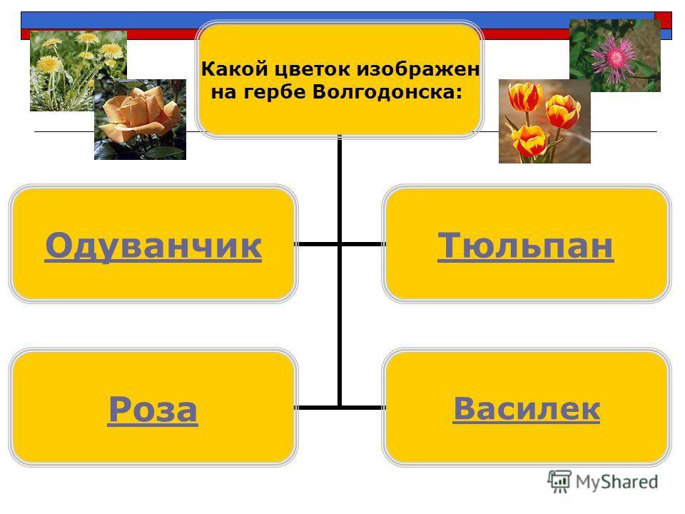 Какой цветок изображен на гербе Волгодонска: ОдуванчикТюльпан РозаВасилек