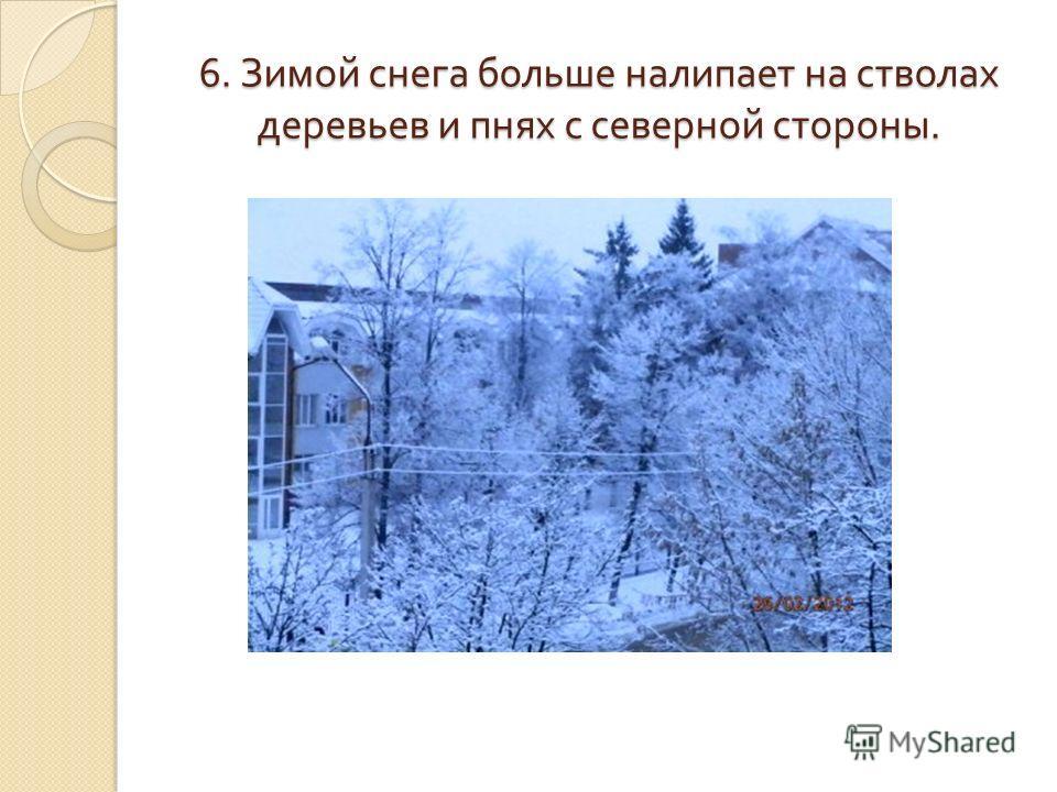6. Зимой снега больше налипает на стволах деревьев и пнях с северной стороны.