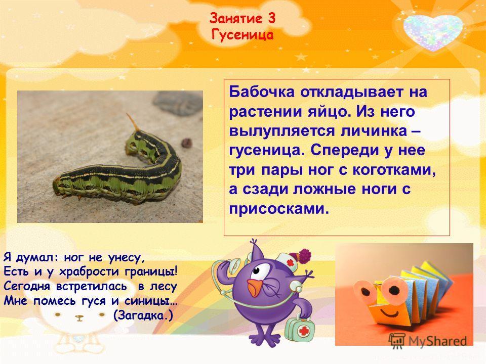 Занятие 3 Гусеница Я думал: ног не унесу, Есть и у храбрости границы! Сегодня встретилась в лесу Мне помесь гуся и синицы… (Загадка.) Бабочка откладывает на растении яйцо. Из него вылупляется личинка – гусеница. Спереди у нее три пары ног с коготками