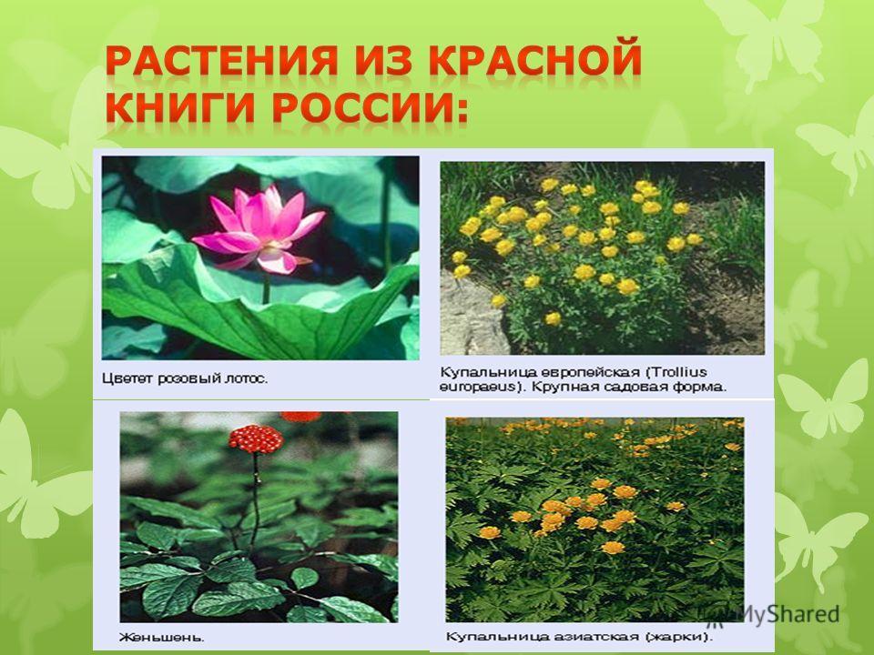 растения россии список с фото
