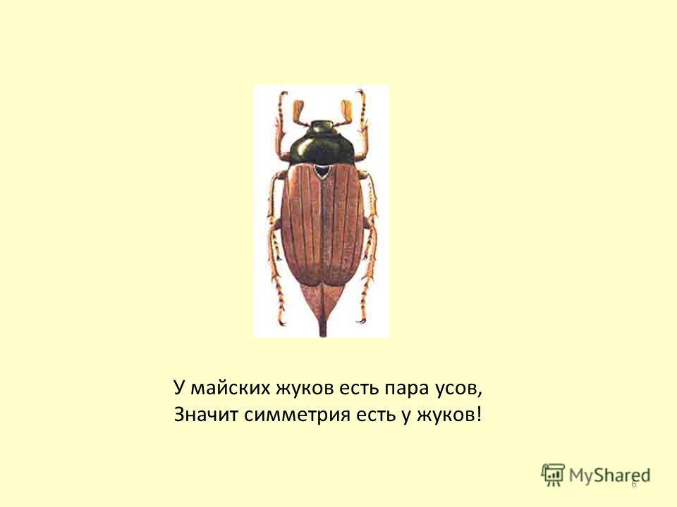 У майских жуков есть пара усов, Значит симметрия есть у жуков! 6