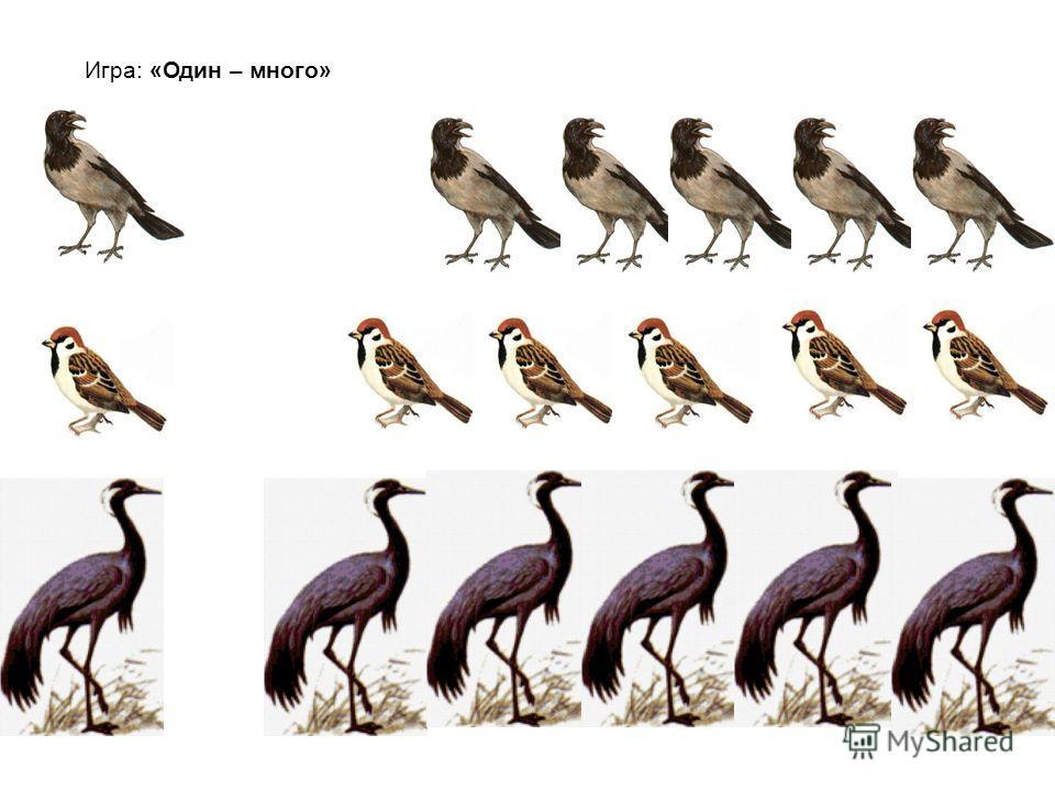Загадки, игры : «Назови одним словом», «Перелетные, зимующие птицы», «Где находится птица?» Верещунья белобока, а зовут её … Чик-чирик, к зернышкам прыг… Кто на дереве сидит и кар-кар кричит?… В синем небе голосок. Будто крохотный звонок… Ноги-ходули