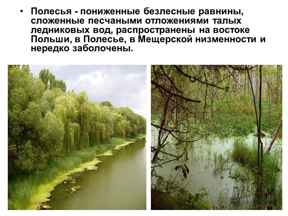 Полесья - пониженные безлесные равнины, сложенные песчаными отложениями талых ледниковых вод, распространены на востоке Польши, в Полесье, в Мещерской низменности и нередко заболочены.