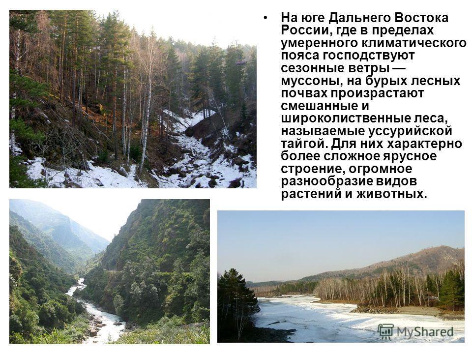 На юге Дальнего Востока России, где в пределах умеренного климатического пояса господствуют сезонные ветры муссоны, на бурых лесных почвах произрастают смешанные и широколиственные леса, называемые уссурийской тайгой. Для них характерно более сложное