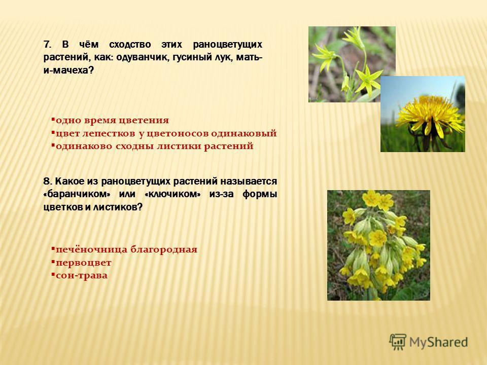 7. В чём сходство этих раноцветущих растений, как: одуванчик, гусиный лук, мать- и-мачеха? одно время цветения цвет лепестков у цветоносов одинаковый одинаково сходны листики растений 8. Какое из раноцветущих растений называется «баранчиком» или «клю