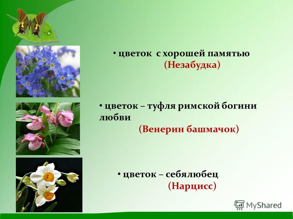 цветок – туфля римской богини любви (Венерин башмачок) цветок – себялюбец (Нарцисс) цветок с хорошей памятью (Незабудка)